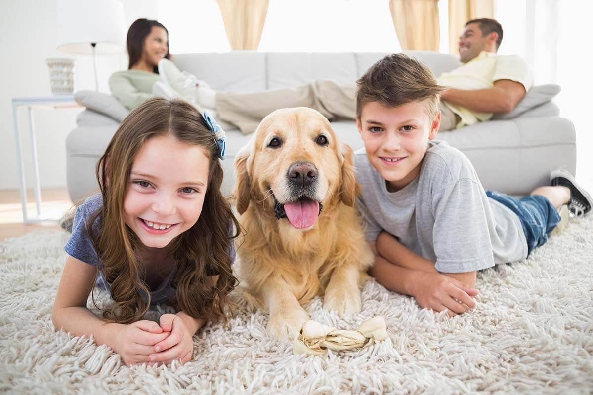 השטיח ובעלי חיים מכילים אלרגנים שנכנסים למזגן